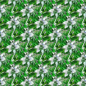Emerald Green Autumn Crocus