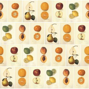 Vintage Fruit Pattern - ZyndiePop