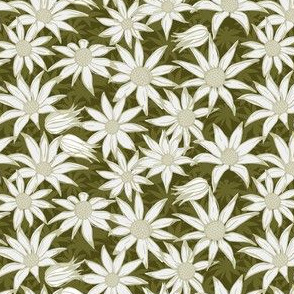 Flannel flowers for Maude