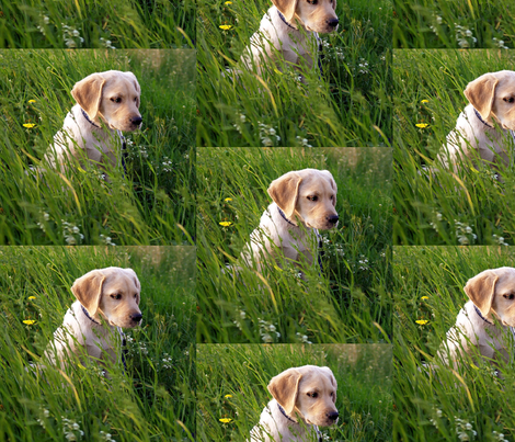 Yellow Lab Puppy In The Grass fabric by dogdaze_ on Spoonflower - custom fabric