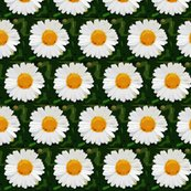 Rdaisytwo_shop_thumb