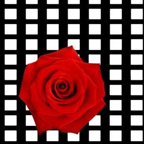 ooh la la! Mesh  rose