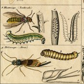 I_am_bugging_out_in_historic_proportions____large_by_peacoquette_designs_shop_thumb