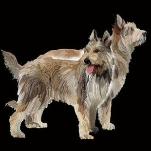 two_berger_picard_dogs