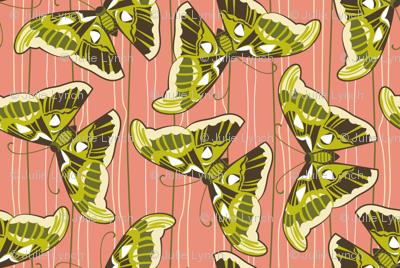 Asian butterfly