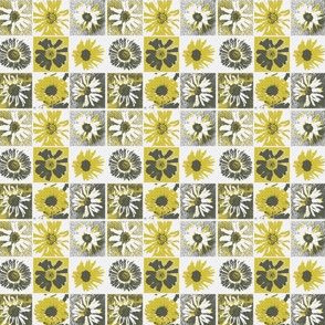 gray and yellow daisies