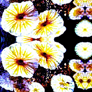yellow flowers mirrored
