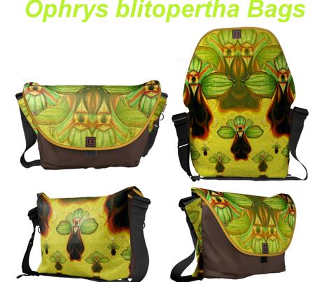 O.Blitopertha