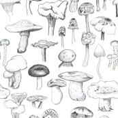 The Mushroom Gang