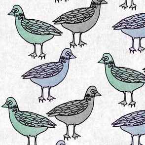 Urban Pigeon