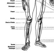Rlabeled-skeleton_shop_thumb