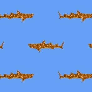 The Life Aquatic Jaguar Shark