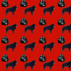 Thumper_cc1507_A
