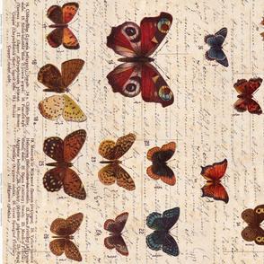 Butterfly Border - ZyndiePOP