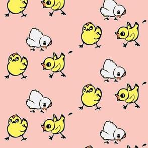 Chicks on salmon pink
