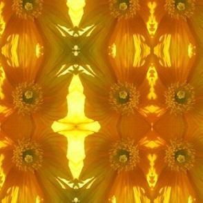 Yellow Poppies - shadowed!