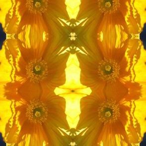 Poppies - sunlight!