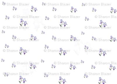 Iris_pattern_2_preview