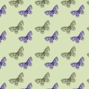 Green and Purple Butterflies
