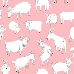 Goats playing - Baby Pink