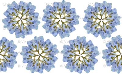 Manx Flora - hydrangea