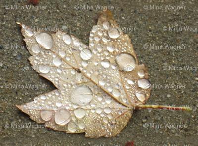 Maple Leaf with Raindrops - half-brick