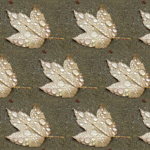 Maple Leaf with Raindrops - half-brick