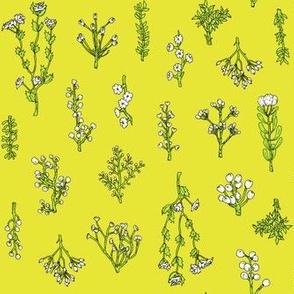 Plant Bits | Chartreuse