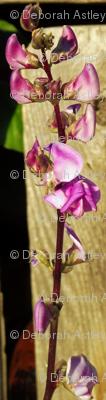 Lablab Bean Blossom in Half Drop Repeat