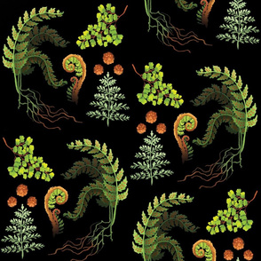 Botanical Illustration- Ferns