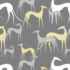 Sighthounds grey yellow