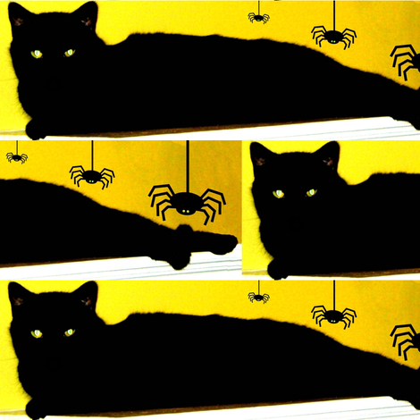 Spiders and Black Cats - Boo! fabric by robin_rice on Spoonflower - custom fabric