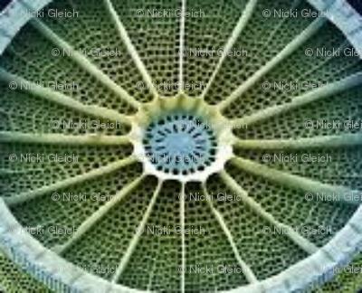 green diatom8