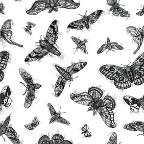MOTHS_PATTERN_BW_SPOONFLOWER