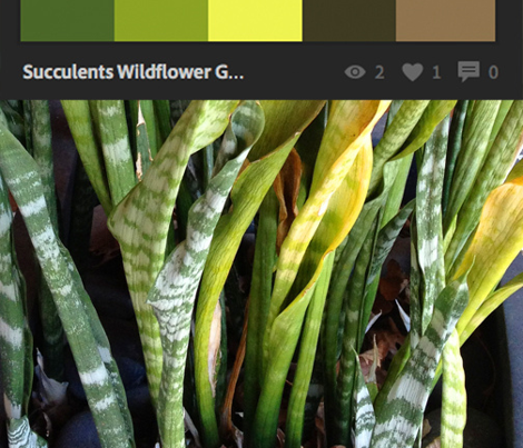 Rrwild_succulents-02_comment_342853_preview