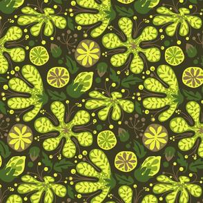 Wild_Succulents-02
