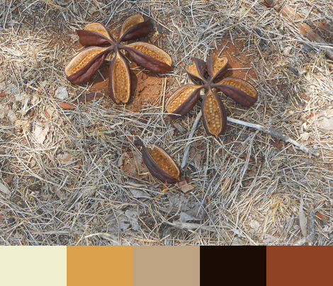 Rrrra_wide_brown_land_by_rhonda_w_comment_342087_preview
