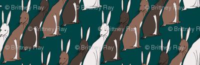 Kuler Rabbits