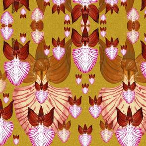 O.Papilionacea