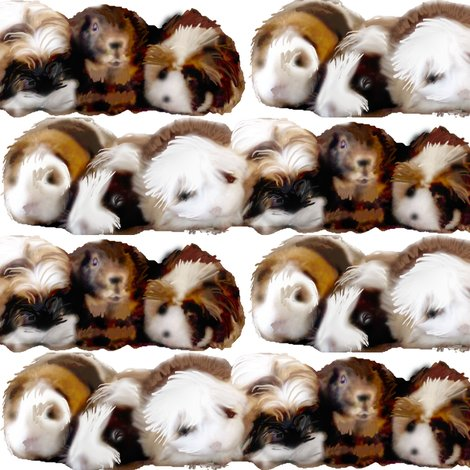 2394256_rrguinea_pigs_are_my_pasion_shop_preview