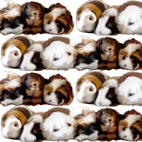 Guinea_Pigs_Are_My_Passion fabric by dogdaze_ on Spoonflower - custom fabric
