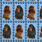 Renglish_toy_spaniel_shop_thumb