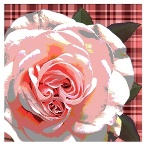 16_X_16_pillow_front_rose_3