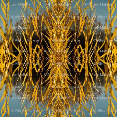 Golden Willows 3972