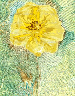 Ranunculus Watercolor