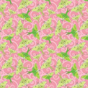 Luna Moth Ballet in Pink