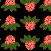 catawba rhododendron coral green black