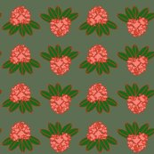 Rrhododendron_catawbiense_coral_and_green_on_cream_shop_thumb
