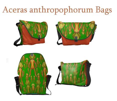 A.Anthropophorum