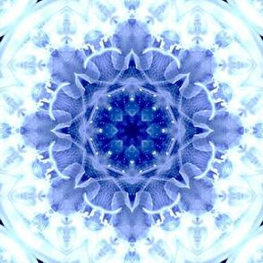 Jellyfish_rose_Large _6870